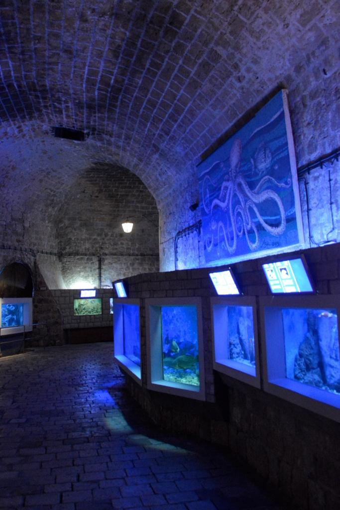 Akwarium w Dubrovniku.